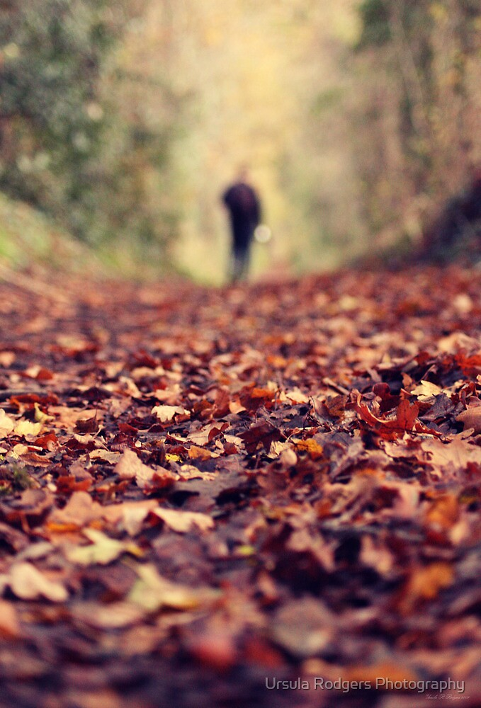 Autumn Walk by Ursula Rodgers Photography