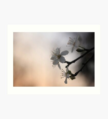On an evening in spring... Art Print