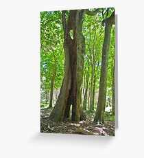 Tree shiloutte, New Zealand Greeting Card