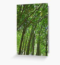 Tree trunks in sunlight, vertical Greeting Card