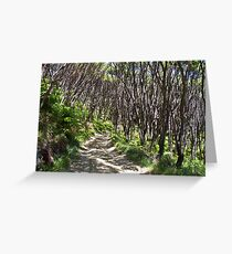 manuka trees and fern with winding road Greeting Card