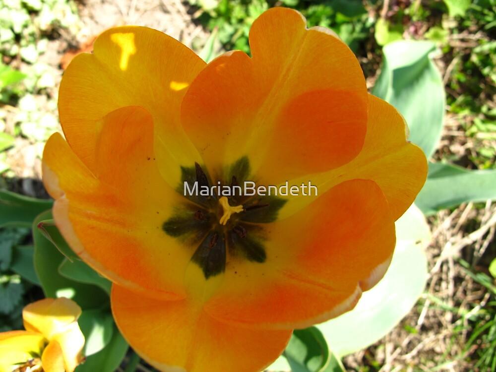 Lemonade Tulip by MarianBendeth