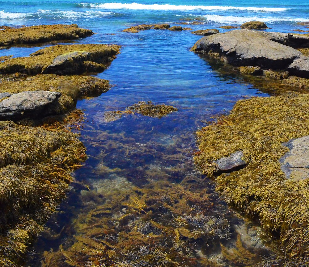 Rock Pool by PaperRosePhoto