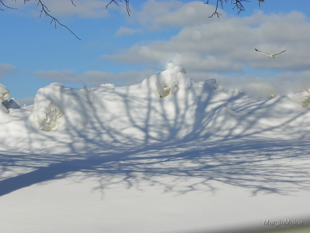 Shadows on the Snow by MaryinMaine