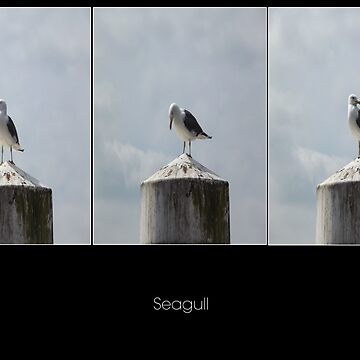 Seagull by S-Shadowman
