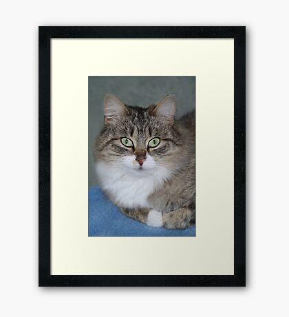 Dolly ~ Framed Print
