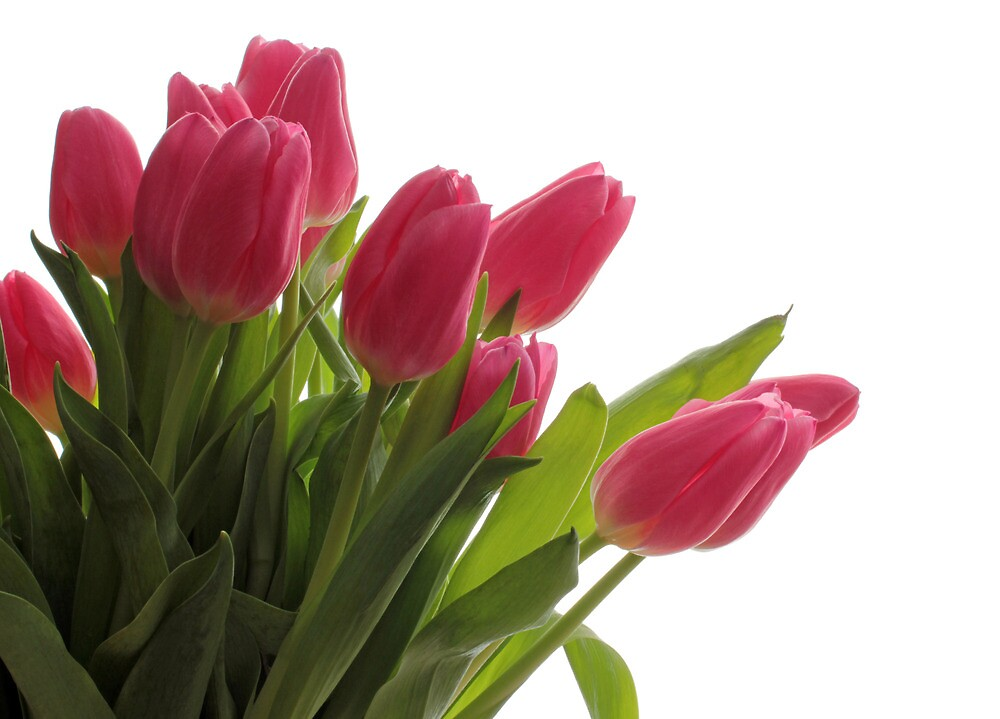 Pink Bouquet by Lynn Gedeon