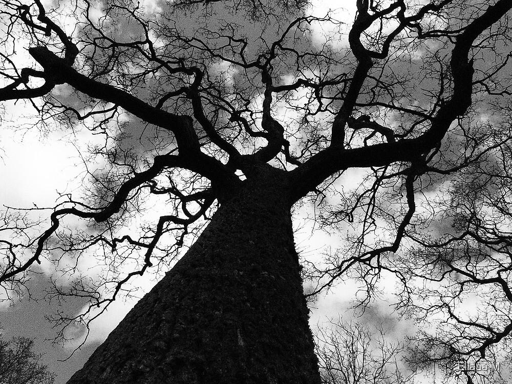 Mighty Oak by Ellaaa M