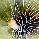 Lion Fish  by Selina Ryles