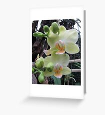 Soft Colours Greeting Card