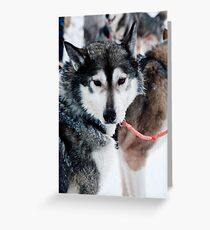 I am part wolf Greeting Card