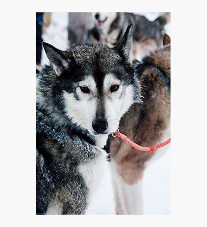 I am part wolf Photographic Print
