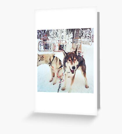Huskies, Lapland Greeting Card