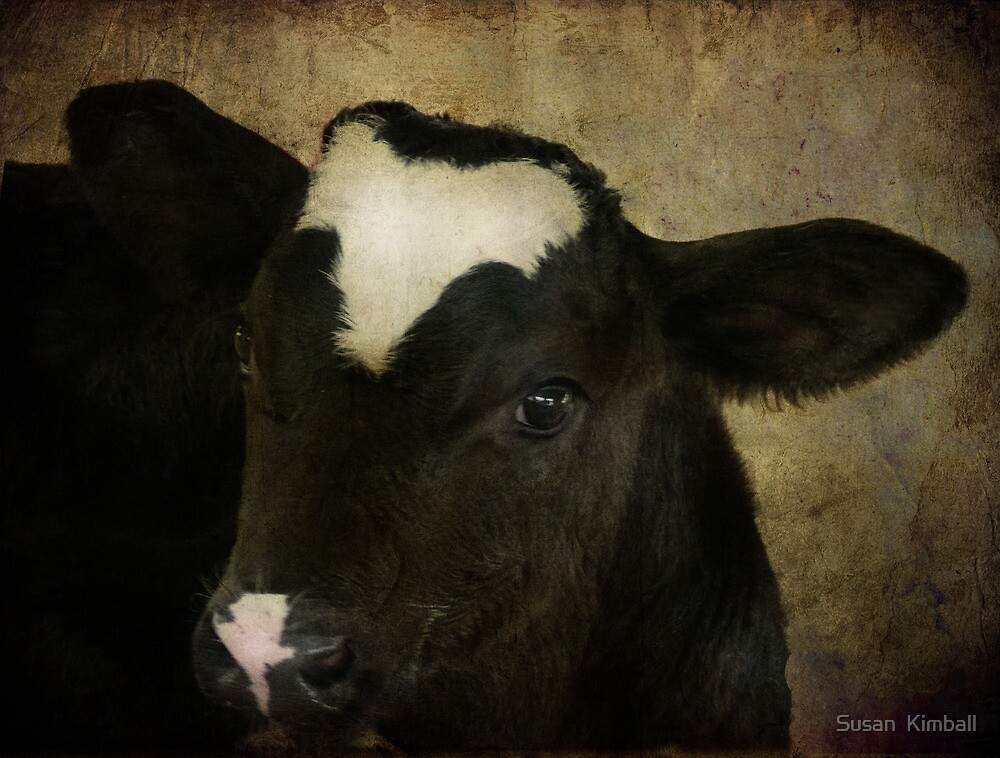 My First Trip to the S. Florida Fair by Susan  Kimball