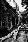Stretched Roots, Cambodia by Michael Treloar