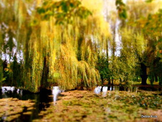 Willow tree on Lily Pond by Debrak2012