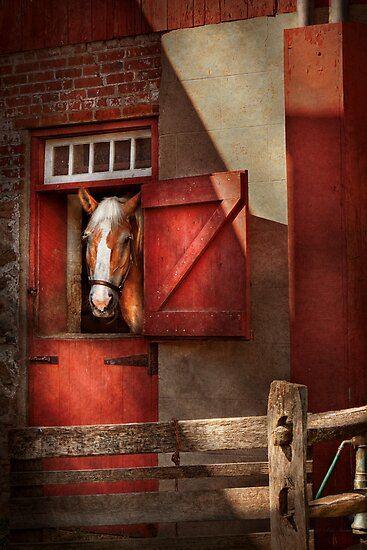 Animal - Horse - Calvins house  by Michael Savad
