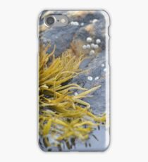 Seaweed Amongst the Rocks iPhone Case/Skin