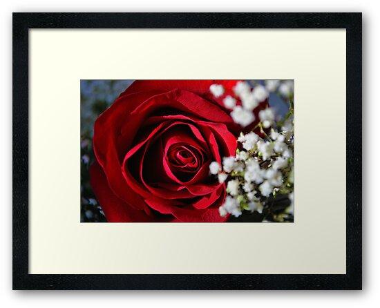 My Valentine by Bill Colman