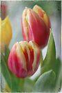 tulips . . . .  by Teresa Pople