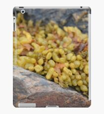 Seaweed Between Rocks iPad Case/Skin