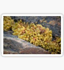 Seaweed Between Rocks Sticker