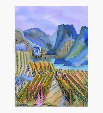 Okanagan Vineyard 2 Photographic Print