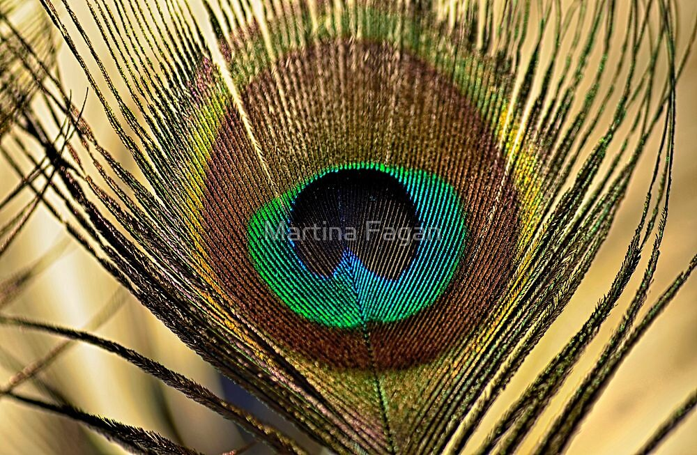 A Feather  by Martina Fagan