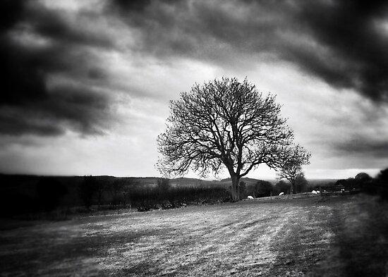 Tree by Oli Johnson