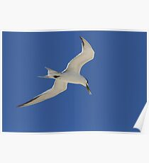 Tern Time Poster
