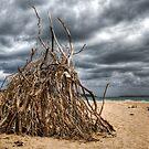 Ready To Burn by Scott Sheehan