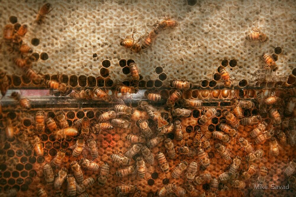 Apiary - Bee's - Sweet success by Michael Savad