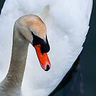 The Swan by EdwardKay