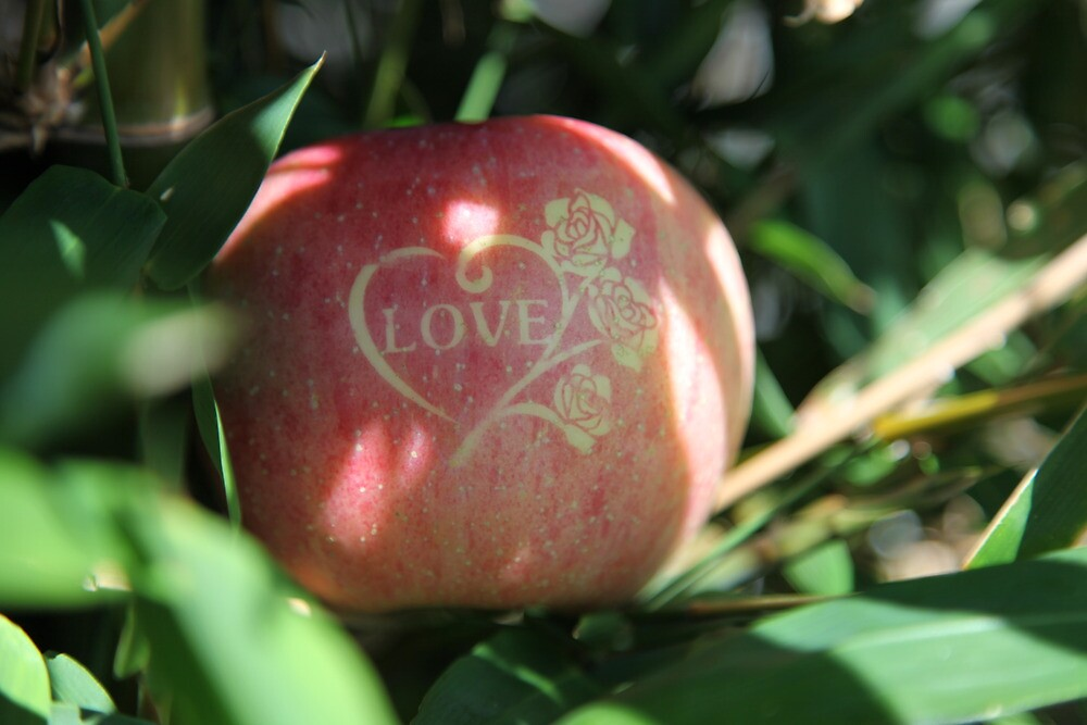 Lovely Apple by v-something