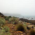 Sea Shore Path Mornington by Glen Johnson