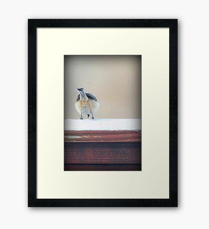 Birdie Bum ~ Framed Print