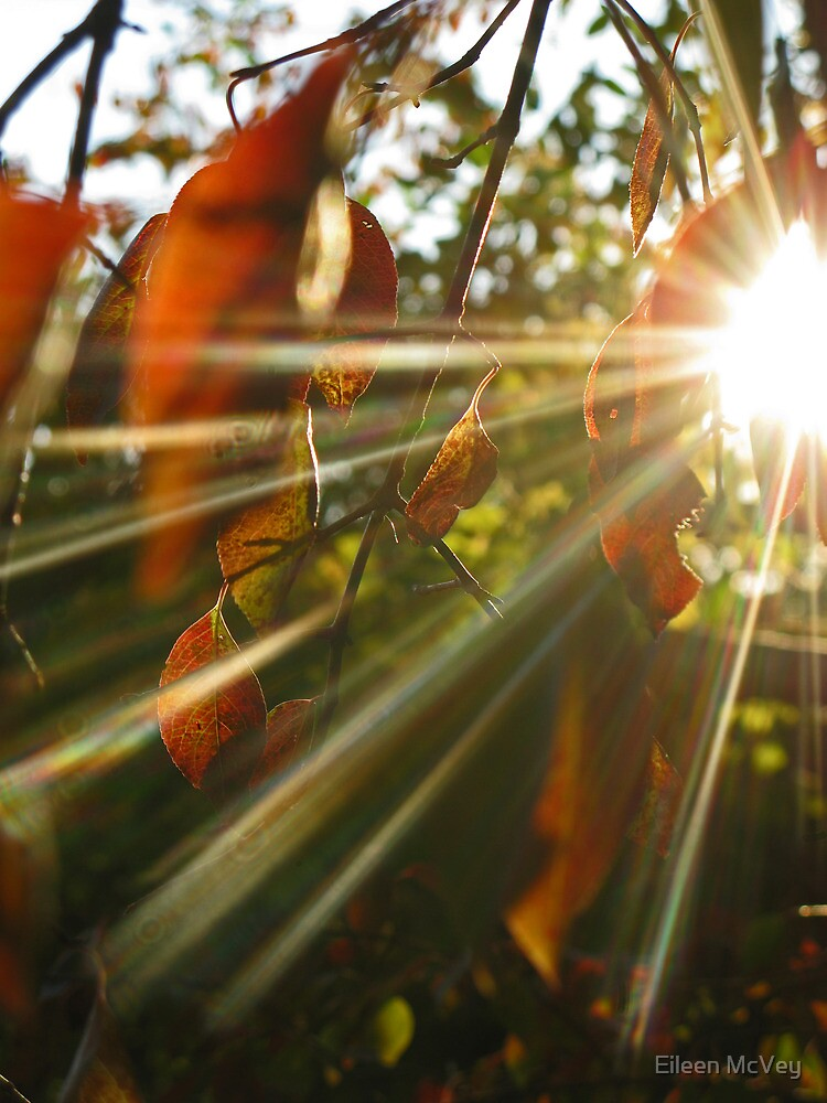 Catching Some Fall Rays by Eileen McVey