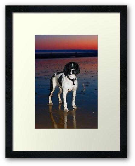 benson at cooden beach - sunset by Paul Morris