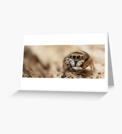 (Simaethula ZZ483) Jumping Spider #5 Greeting Card
