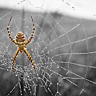 Golden Spider by LadyEloise