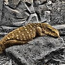 Lizard On The Rocks. by HanselASolera