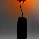 The Orchid in My Sunset by TheCandle