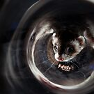 Ferret Reflection 2 by Mark Cooper