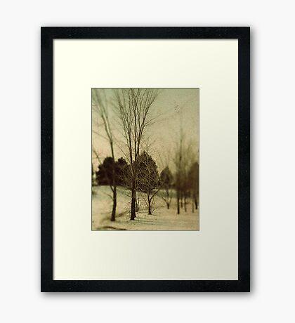 December Trees Framed Print