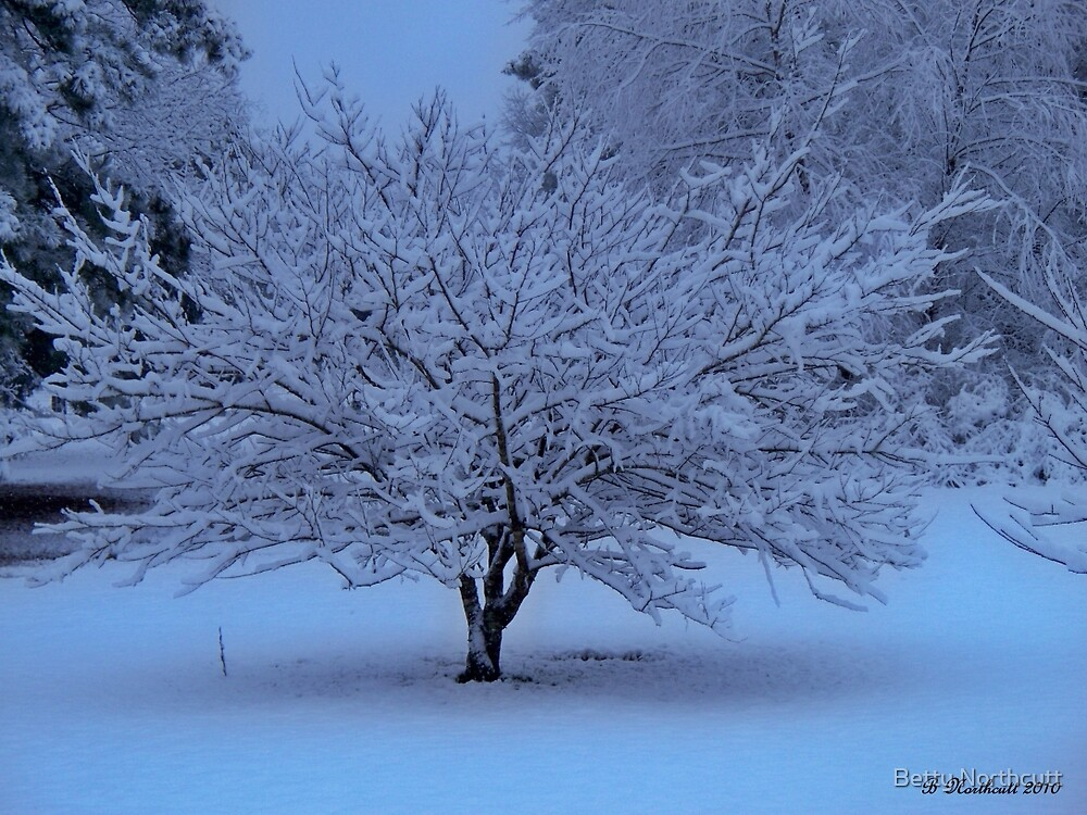 Blue Christmas - Snow In Texas by Betty Northcutt