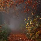The path of autumnal enchantment by jchanders