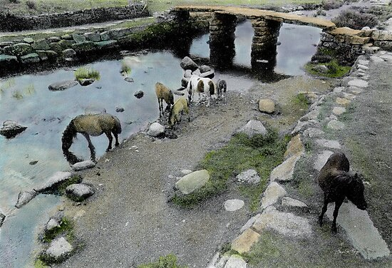 Ponies Under a Bridge, Wales by Wayne King