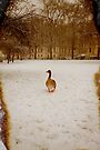 Where is everyone by Jasna