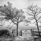 Pine Tree in Infrared by Robin Whalley