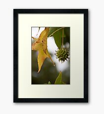 Feeling The Pinch Framed Print